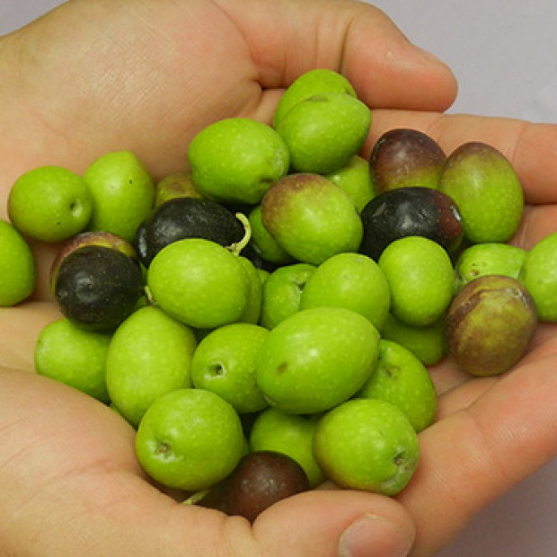 How to make and preserve your own table olives