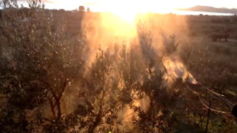 Ημερολόγιο Ελαιώνος: Μετά το κλάδεμα απολύμανση video